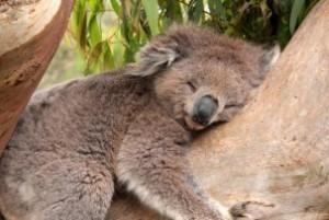 Tree hugger a