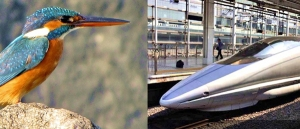The beak and head profile of the Kingfisher solved the turbulence problem for the bullet train